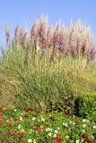 Herbe des pampas et dahlias Images stock