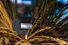 Herbe douce à vendre sur le marché d'un agriculteur canadien français photo stock
