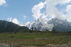 Herbe du nord d'arbre de neige de nature d'Inde de ciel de montagne du Cachemire Image stock