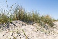 Herbe dunaire à la plage photographie stock libre de droits