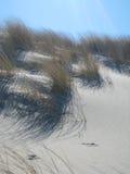 Herbe dunaire Photographie stock