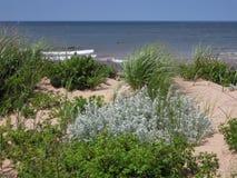 Herbe dunaire et arbustes Photo stock