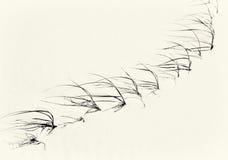 Herbe dunaire sur une plage australienne Images libres de droits