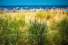 Herbe dunaire verte à la plage Image libre de droits