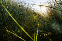 Herbe en Angleterre Photo libre de droits