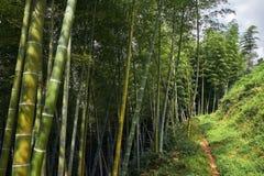 Herbe en bambou un jour ensoleillé Photo libre de droits