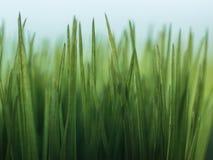 Herbe en plastique verte Photos libres de droits