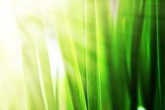 Herbe ensoleillée Photographie stock libre de droits
