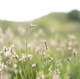 Herbe ensoleillée verte Image stock