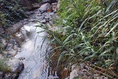 Herbe envahie sur la banque d'un courant de montagne uzbekistan Images stock
