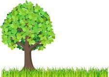 Herbe et arbre vert d'isolement sur le fond blanc Photo libre de droits