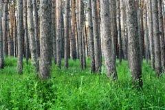 Herbe et arbres frais verts en stationnement Photos stock