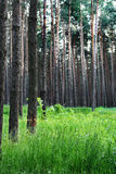 Herbe et arbres frais verts en stationnement Photographie stock libre de droits