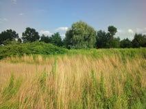 Herbe et arbres naturels avec le ciel bleu Photo libre de droits