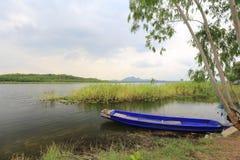 Herbe et aviron de rivière Images stock