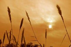 Herbe et centrales silhouettées contre le soleil photos stock