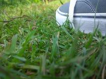 Herbe et chaussures image libre de droits