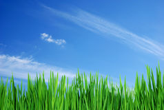 Herbe et ciel Photo stock