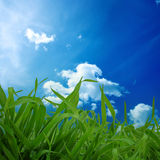 Herbe et ciel bleu Photos libres de droits
