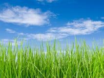 Herbe et ciel bleu Photographie stock libre de droits