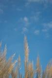 Herbe et ciel de mer Photo stock