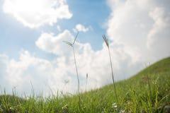 Herbe et ciel pendant le matin Photos libres de droits