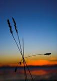 Herbe et coucher du soleil Image stock
