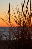Herbe et coucher du soleil Photographie stock