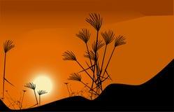 Herbe et coucher du soleil Image libre de droits