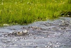 Herbe et eau Photographie stock libre de droits
