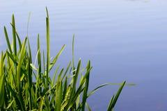 Herbe et eau Photo libre de droits