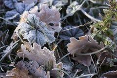 Herbe et feuilles congelées Images libres de droits