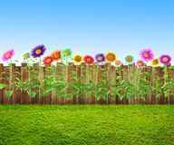 Herbe et fleurs à l'arrière-cour photographie stock libre de droits