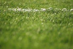 Herbe et fleurs Photographie stock libre de droits