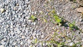 Herbe et fleurs blanches images libres de droits