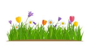 Herbe et fleurs frontière, fond de blanc d'élément de décoration de carte de voeux Illustration de vecteur Photo stock
