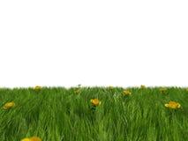 Herbe et fleurs jaunes Photographie stock libre de droits