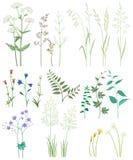 Herbe et fleurs sauvages illustration de vecteur