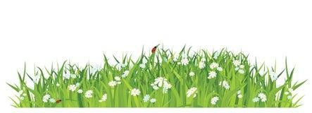 Herbe et fleurs sur le fond/vecteur blancs