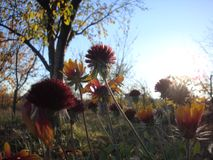 Herbe et fleurs sur le pré au coucher du soleil Fond floral dans les couleurs ultra-violettes photographie stock libre de droits