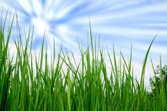 Herbe et le ciel Photo stock