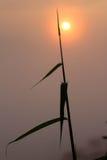 Herbe et lever de soleil rougeoyant hauts Photo stock
