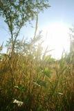 Herbe et lumière du soleil Photo libre de droits