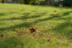 Herbe et lumière du soleil Photographie stock