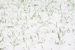 Herbe et neige Photographie stock libre de droits