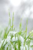 Herbe et neige Photographie stock