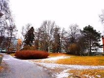 Herbe et neige Images libres de droits