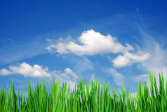 Herbe et nuages Images stock
