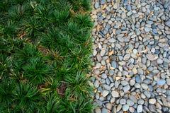Herbe et pierre Photographie stock libre de droits