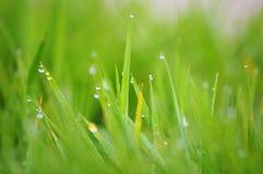 Herbe et pluie Photos libres de droits
